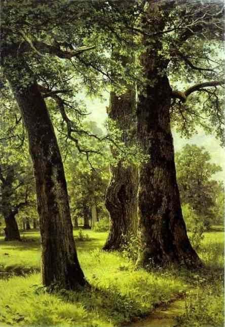 In tribute to the Oak Shishkin29