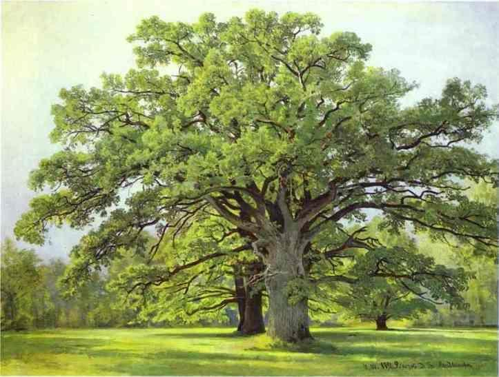 Ivan Shishkin. Oaks in Old Peterhof.