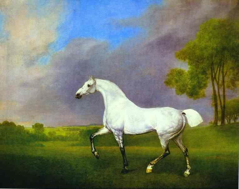 George Stubbs. A Grey Horse.