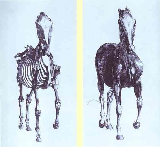 George Stubbs. Engravings from The Anatomy of the Horse.