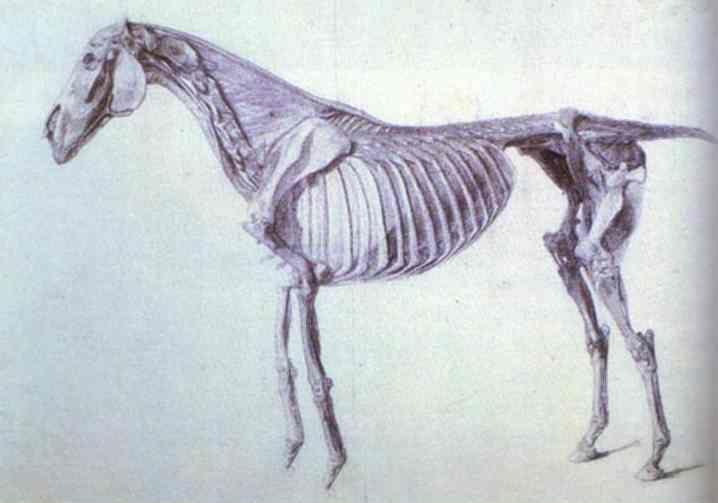 George Stubbs. Finished Study for the Fifth Anatomical Table.